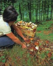 Люди пробующие псилоцибивидные грибы
